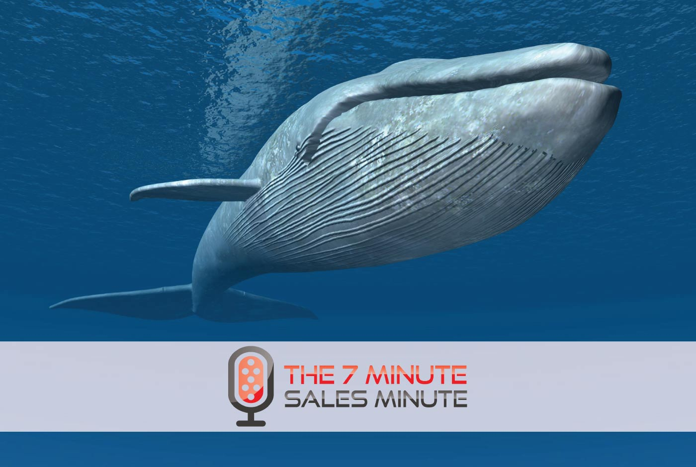 7 Minute Sales Minute Podcast - Season 13 - Episode 15 - No Moby Dicks - photo of whale